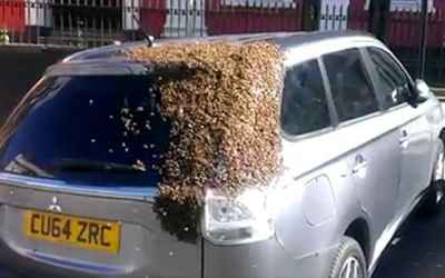 Swarm of bees follow a car for over 24 hours attempting to rescue their queen