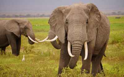 UK Proposes to Ban Ivory in Desperate Effort to Save Elephants
