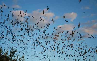 Why do bats live so much longer than other small, high energy mammals?