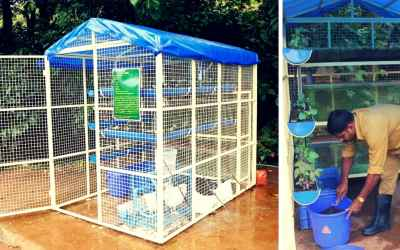 This Integrated Farming Unit Lets You Grow Fish, Poultry & Vegetables Organically