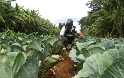 Farmers see promise and profit for agroforestry in southern Kenya