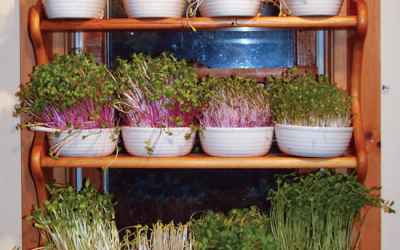 Grow a Year-Round Indoor Salad Garden - Organic Gardening